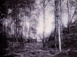 inha_i-k-_-_i_haavus_sortavala_1893