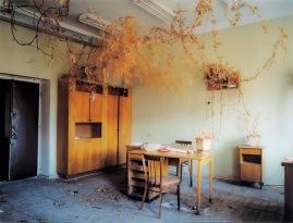 lenkkeri_ville_-_dead_domestic_plants